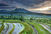 ox driven plough in the terraced rice fields nr Tirtagangga at dawn with the volcanic peak of Gunung Lempuyang, Bali, Indonesia - Stock Image - BCP219