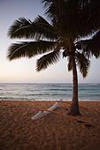 Outrigger canoe and palm tree on hawaiian beach - Stock Image - BK7ER0