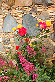 Flower dispaly, Fikardou village, Cyprus. - Stock Image - E15MWM