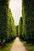 Alley on Cemetary, Sweden - Stock Image - CEAP5Y