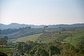 The vineyards of Miolo Wine Groupe, Bento Goncalves, Vale dos Vinhedos, southern Brazil - Stock Image - AXD54X