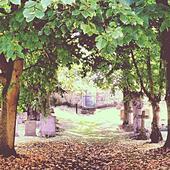 Graveyard - Stock Image - S00221