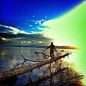 Man balancing on log over lake, Duncan, British Columbia, Canada - Stock Image - D6YK7T