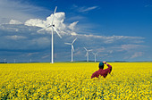 a farmer views wind turbines from a blooming canola field, St. Leon, Manitoba, Canada. - Stock Image - CFAGH5