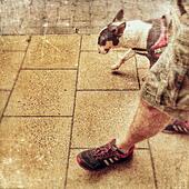Dog walking - Stock Image - S05NAK