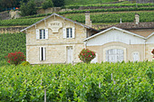 chateau pavie saint emilion bordeaux france - Stock Image - BEATYX