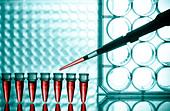 Microtubes and micropipet lab test - Stock Image - CPTM0Y