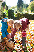 Girls petting dog in autumn leaves - Stock Image - D4F5YR